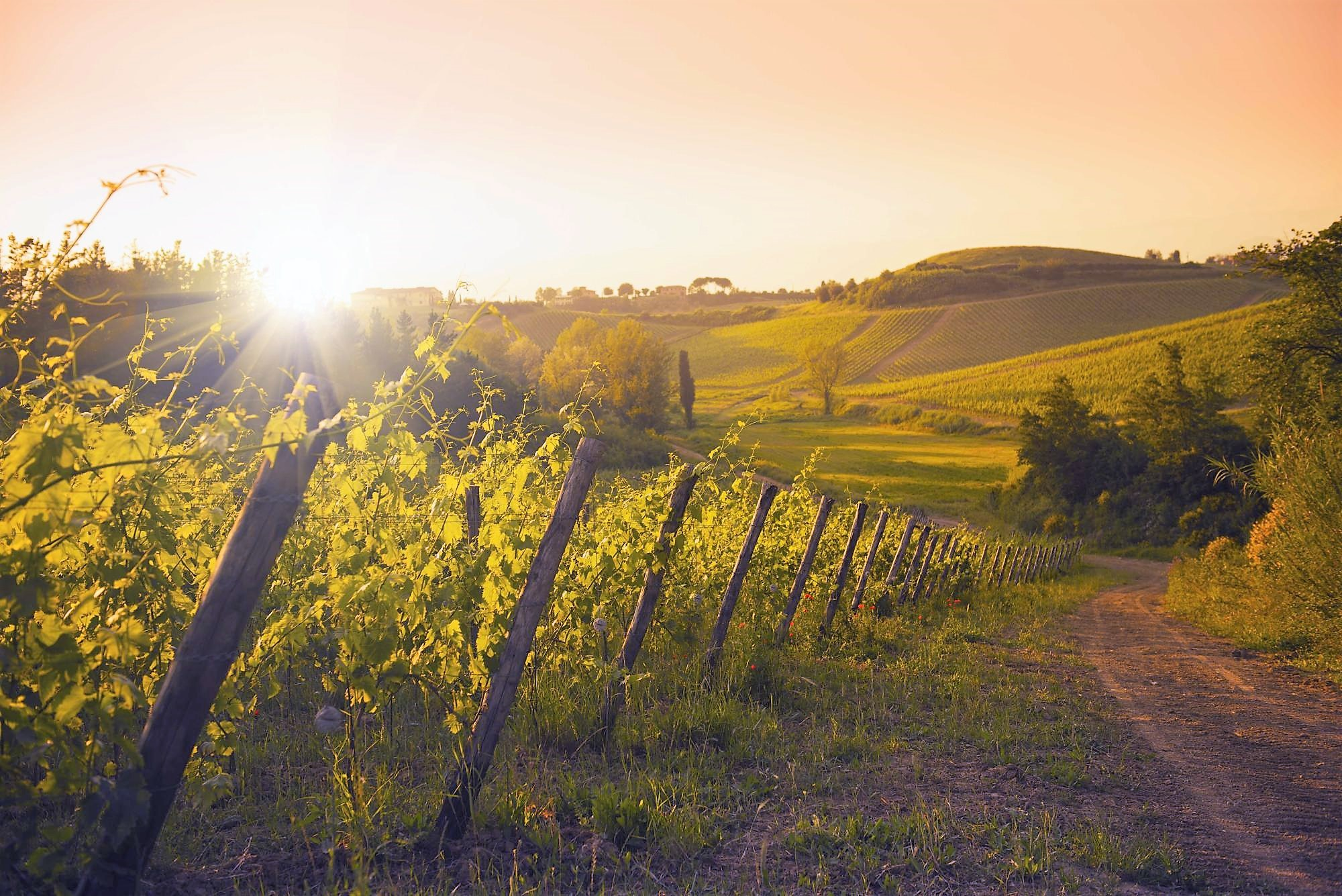 Agricoltura Biologica: le nostre vigne